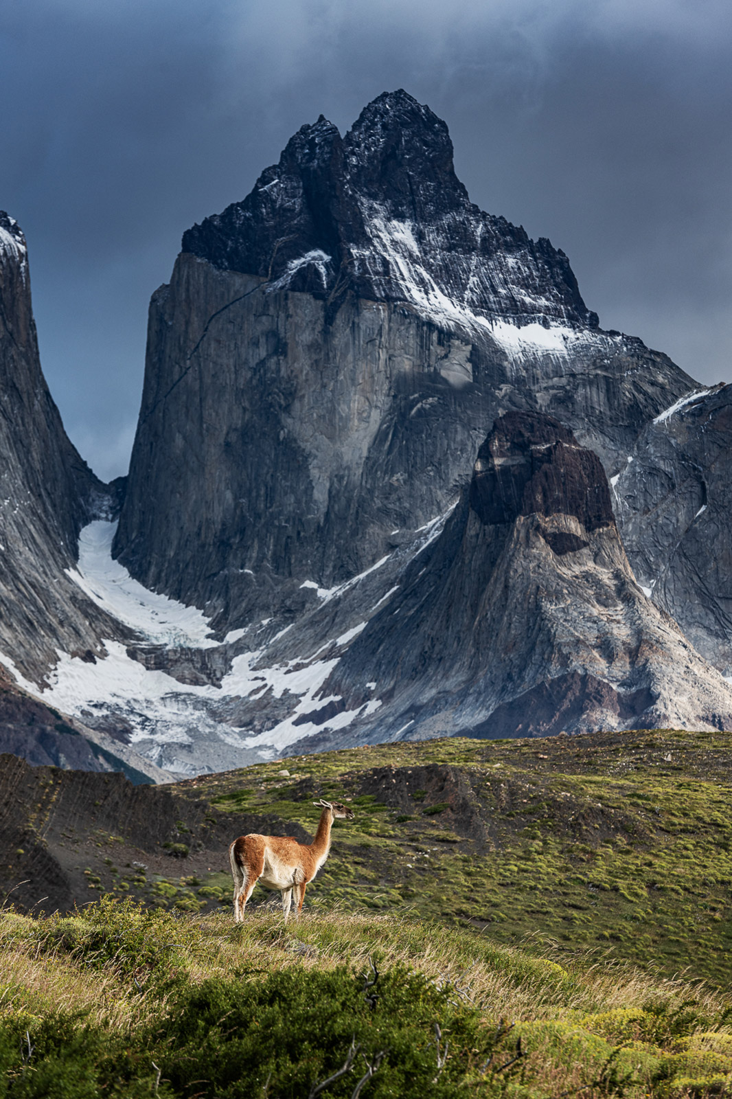 Patagonien in Chile Guanacco - Stefan Schäfer Landschaftsfotograf