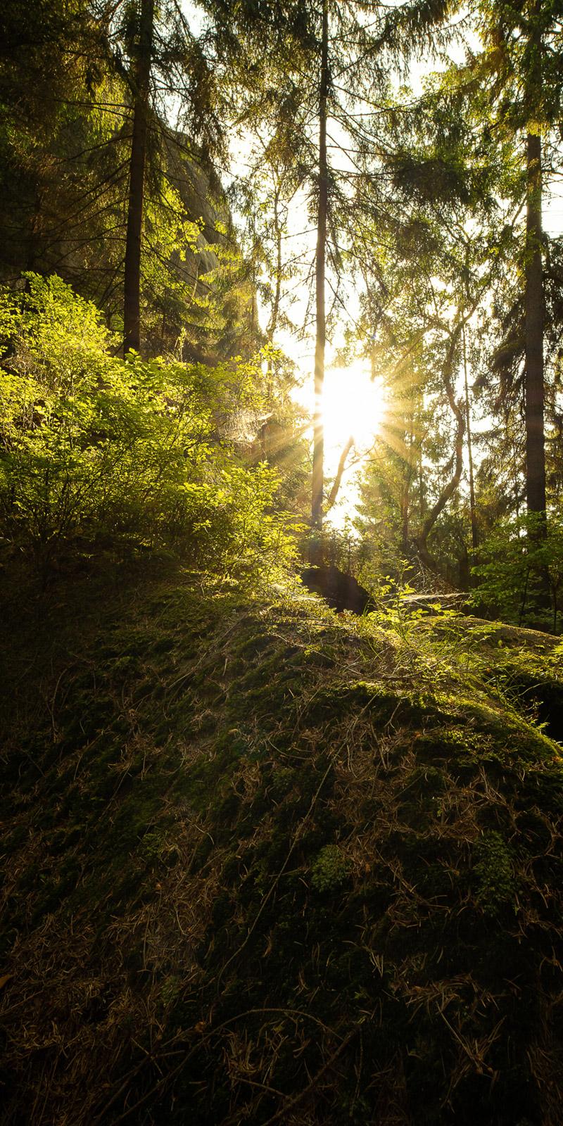 Wald in Deutschland - Stefan Schäfer Landschaftsfotograf