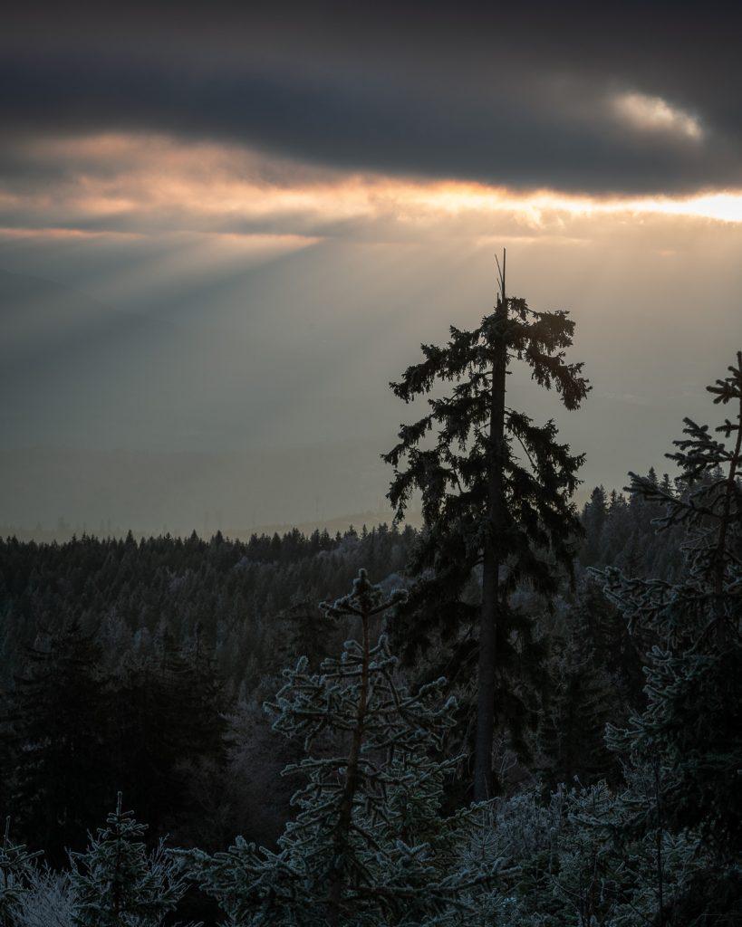 Bayrischer Wald mit Bastian Werner